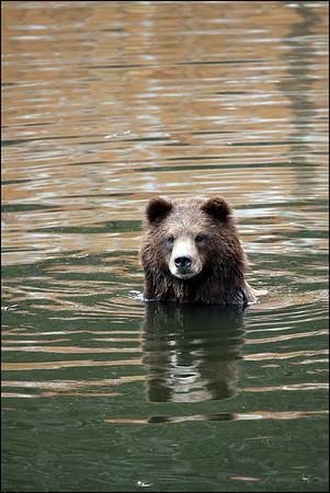 Alaska-Sitka(edit)_0208
