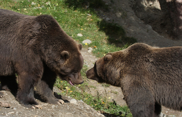 Bear Hibernation Day