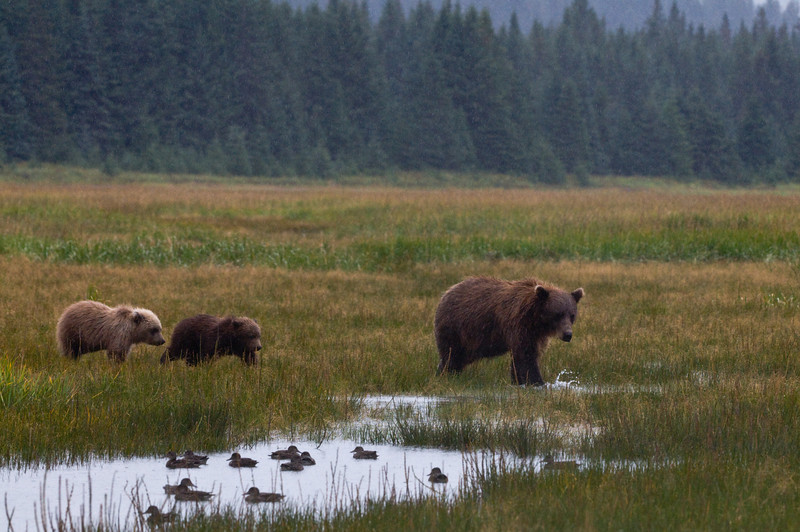 Mother Bear with Her 2 Cubs