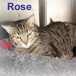 Rose adopted from CHAC on 7/14/06.