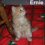 Ernie adopted out of his foster home on 7/27/07.