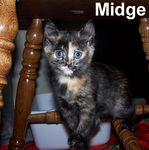 Midge adopted out of her foster home on 7/14/06. Midge is very useful around the house. She'll stand guard underneath your dining room table and make sure no spilled food is left on the floor.