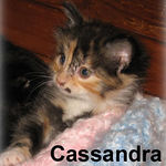 Cassandra adopted out of her foster home on 7/14/06.  She and Midge are going to the same home so they can keep each other occupied.