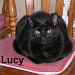Lucy adopted from CHAC on 7/16/06. Lucy and Jack are siblings.  While Jack wants to be in the middle of everything, Lucy prefers to be insconspicuous.  If one black cat will add love and interest to your household, just think what two can do for you.