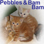 Pepples and BamBam were pre-adopted on 6/14/06 and went to their forever home on 7/17/06.
