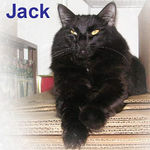Jack and his sister, Lucy, were adopted together from CHAC on 7/16/06. Jack is in a state of perfect catly rapture when he finds an elevated spot to watch for any and all household activities.  He's an outgoing cat, loves to play with toys, and is a great conversationalist.
