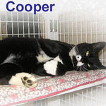 Cooper adopted from CHAC on 7/23/06. Cooper is happy to have the easy life at the Feline Friends facility which has all the accommodations of a 5 star resort. Cooper is tall, long and lanky.  This remarkable boy is going to bring you endless hours of pleasure.