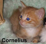 Cornelius adopted out of his foster home on 7/17/06.  Cornelius and Clarence were adopted by Tanglewide Veterinary Hospital so we know they're going to get great medical care.
