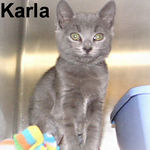 Karla adopted from CHAC on 7/23/06. This bundle of love is wonderfully sweet and looking for a special loving home.