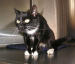 Angelou was adopted from the Cat House and Adoption Center on Friday,<br /> 10-13-06