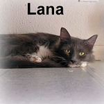 Lana adopted from PetsMart with her sister, Calliope, on 10/22/06.