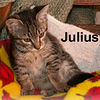 Julius adopted from CHAC on 10/8/06. Getting a picture of Julius isn't easy. He's a busy kitten with a full agenda of: playtime, snuggling, eating, and sleeping.  Posing for a photo just isn't a priority.