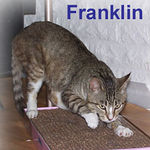 Franklin was adopted from the Cat House and Adoption Center on Thursday,10-12-06 <br /> <br /> Franklin is cute, sweet, and smart. He already knows the appropriate place to get some exercise and scratch his claws. Aren't those cardboard scratchers just wonderful?