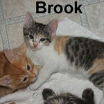 Brook adopted out of her foster home on 5/30/07.