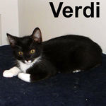 Verdi adopted from CHAC on 6/10/07. This bold kitten is all boy.  He's curious about everything and you'll definitely want to prepare the castle before bringing Verdi home. His sweet and friendly temperament will make it worth your effort.