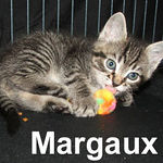 Margaux adopted out of her foster home on 5/31/07.  This lucky girl was adopted with her sister, Millicent.