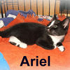 Ariel adopted out of her foster home on 6/9/07.