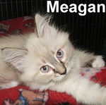 Meagan adopted out of her foster home (with Micky) on 6/8/07.
