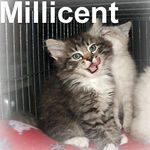 Millicent adopted out of her foster home on 5/31/07.  Millicent was adopted with her sister, Margaux.