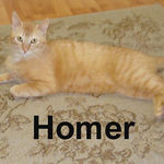 Homer adopted from CHAC on 6/10/07. It's raining red tabbies at the Cat House and Homer is another perfect example of why people love these cats.  This boy is large and loveable. He's usually too proud to ask for attention, but when it's freely given he adores it and purrs for more.