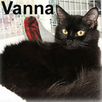 Vanna adopted from CHAC on 6/10/07. Our little beauty has a personality as colossal as any tv star. Vanna is classically stylish in her sleek black attire but it's her friendly disposition that will make you a die-hard fan.