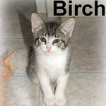 Birch adopted out of his foster home on 5/30/07.