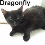 Dragonfly and Firefly were adopted from the Cat House and Adoption Center on Saturday, September 22, 2007