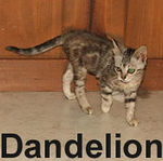 Dandelion and Thistle were adopted from the Cat House and Adoption Center on Saturday, September 22, 2007