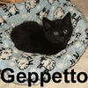 Geppetto and Gideon were adopted from the Cat House and Adoption Center on Sunday, October 14, 2007