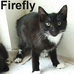Firefly and Dragonfly were adopted from the Cat House and Adoption Center on Saturday, September 22, 2007