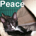 Peace was adopted from her foster home on Sunday, September 9, 2007.