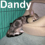 Dandy got adopted from the Cat House and Adoption Center on Thursday, September 13, 2007