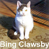 Bing Clawsby adopted from the Cat House and Adoption Center on Friday, February 1, 2007.