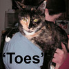 "Pumpkin Pie ""Toes"" was adopted from the Cat House and Adoption Center on Sunday, January 6, 2008.  Pumpkin Pie is a very affectionate and sweet Tortoiseshell that came to Feline Friends because she was one of those cats that ""Just Keeps Getting Pregnant"".  We can say, she's not pregnant and will never be pregnant again.  She's ready to be loved for her wonderful temperament, beautiful purrsonality and cute little ""toes""."