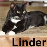 Linder was adopted on Saturday, January 5, 2007.  The handsome and loveable Linder is great company. He likes attention and is an excellent personal helper.  Linder will live with former Feline Friend, Grace.