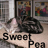Sweet Pea and Cally were adopted from the Cat House and Adoption Center on Saturday, February 2, 2008.