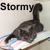Stormy was adopted from Healthy Pets Animal Hospital in January 2008.  Share a grey day with Stormy and you'll feel surrounded by sunshine. This dashing fellow is ready to share all the love you can give.  He'll drool with affection, and is very social and outgoing.