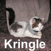 Kringle was adopted from the Cat House and Adoption Center on Saturday, February 2, 2008.