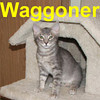 Waggoner was adopted from the Cat House and Adoption Center on Saturday, February 9, 2008.