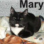Mary and Bulldog were adopted from the Cat House and Adoption Center on Sunday, January 20, 2008,  Looking for Love in All the Wrong Places? Well stop that!  We've got the perfect feline companions waiting for you.  Mary and her brother, Bulldog, are bouncy, happy, playful kittens.  They're the love connection you've been waiting for.