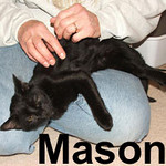 Mason got adopted from the Cat House and Adoption Center on Saturday, January 12, 2008.  Thrifty of spirit and generous of heart, Mason won't let a good lap go to waste.   He's got a great purr that he uses liberally when you meet his affection expectations.
