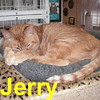Jerry (our faithful friend and resident cat of CHAC) was adopted from the Cat House and Adoption Center on Wednesday, January 23, 2008.