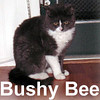 BushyBee adopted from the Cat House and Adoption Center on Friday, February 1, 2007.