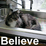 Believe was adopted from the Cat House and Adoption Center on Sunday, January 6, 2008.  Do you BELIEVE?  Well, we Believe this is one of the sweetest little ladies you'll ever meet.  We're  grateful she's with us until she convinces you to Believe that she's the purrfect companion for you. (Maine Coon heritage)