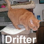 """Driftwood """"Drifter"""" was adopted from the Cat House and Adoption Center on Saturday, January 26, 2008.  Showing up on Harstene Island, Drifter found a building he could settle under.  But, a building isn't a home.  Drifter is one of the most social and loving boys you'll ever meet.  He seeks human companionship and will navigate through a kit and caboodle to reach you."""