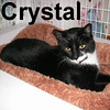 Crystal was adopted and delivered to her new home on Monday, February 11, 2008.  Crystal's priceless little face and large eyes will dress your window beautifully.  But she's much more than a pretty face, Crystal is a courageous survivor with a sweet and gregarious temperament.