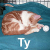 Ty was adopted from the Cat House and Adoption Center on Friday, February 15, 2008.