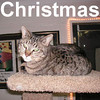 Christmas was adopted from the Cat House and Adoption Center on Saturday, February 16, 2008.