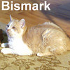 Bismarck adopted from the Cat House and Adoption Center on Friday, February 1, 2007.