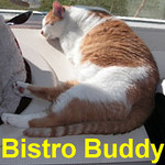 Bistro Buddy was adopted from the Cat House and Adoption Center on Saturday, June 21st and went to his new home on Sunday, June 22, 2008. Bistro Buddy has a friendly and attentive personality. He'll warmly welcome you home and comfort you with his subtle, steady affection.